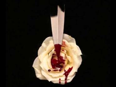 Белая роза с кровью