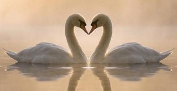 лебединая пара