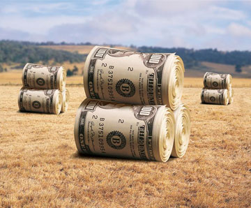 Большие пачки долларов катятся по полю