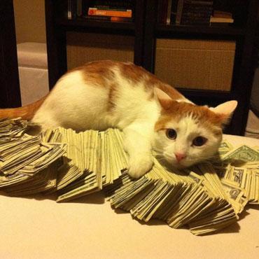 Секреты денежных заговоров в новолуние