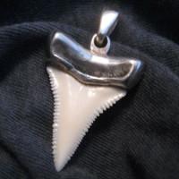 Что таит в себе зуб акулы?