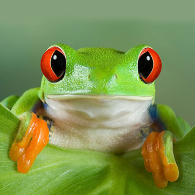 Секрет талисмана в форме лягушки