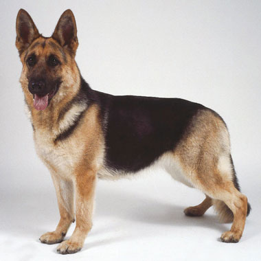 Как защитить свою собаку?