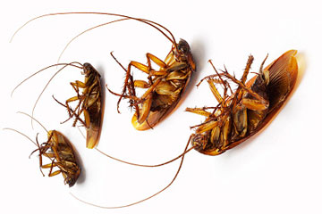 Четыре дохлых таракана