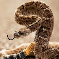 Как подходят друг другу змея-змея?