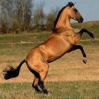 Как подходят друг другу лошадь-лошадь?