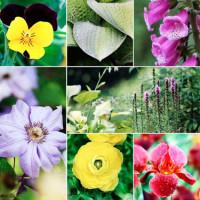 Какое растение подходит именно Вам?