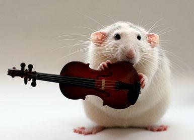 Крыса со скрипкой