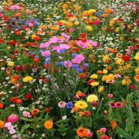 Какой цветок ваш по рождению?