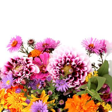 Какой цветок Ваш от рождения?