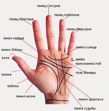 Основные линии на руке