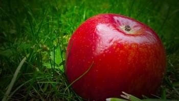 Красное яблоко на траве