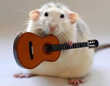 Крыса и гитара
