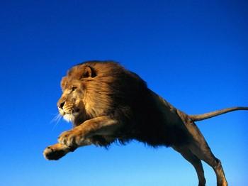 Лев в прыжке