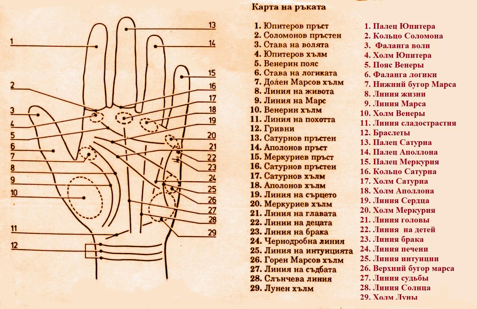 Обозначения всех линий на руке