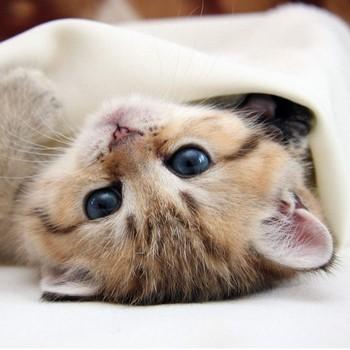 Тайна кошачьих