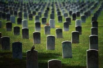 Много могилок