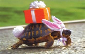 На черепахе подарочная коробка
