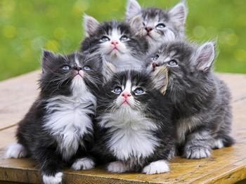 Пять пушистых котят