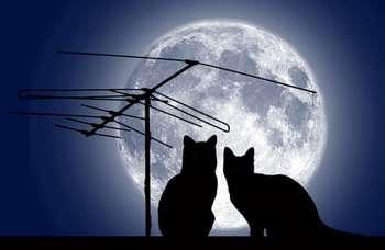 Коты на фоне полной лучны