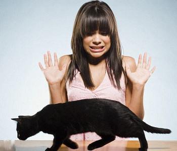 Черная кошка идет мимо девушки
