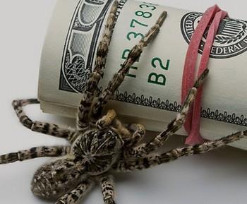 Паук на пачке долларов