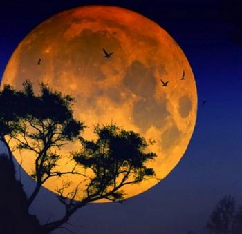 Луна на фоне дерева