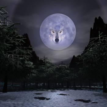 Изображение волка на луне
