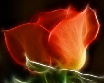 Нарисованный цветок розы