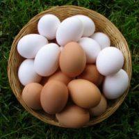 Проверка порчи яйцом